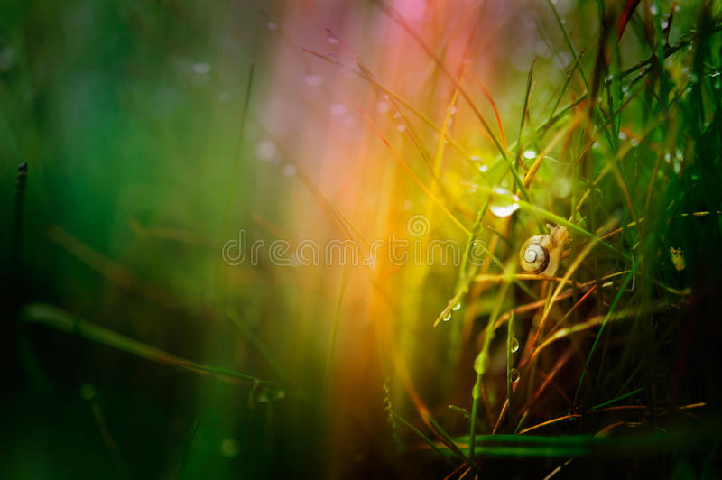 Snail in grass wallpaper. Snail in grass with colorful background wallpaper royalty free stock photo