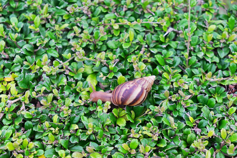 Snail on green plant royalty free stock images