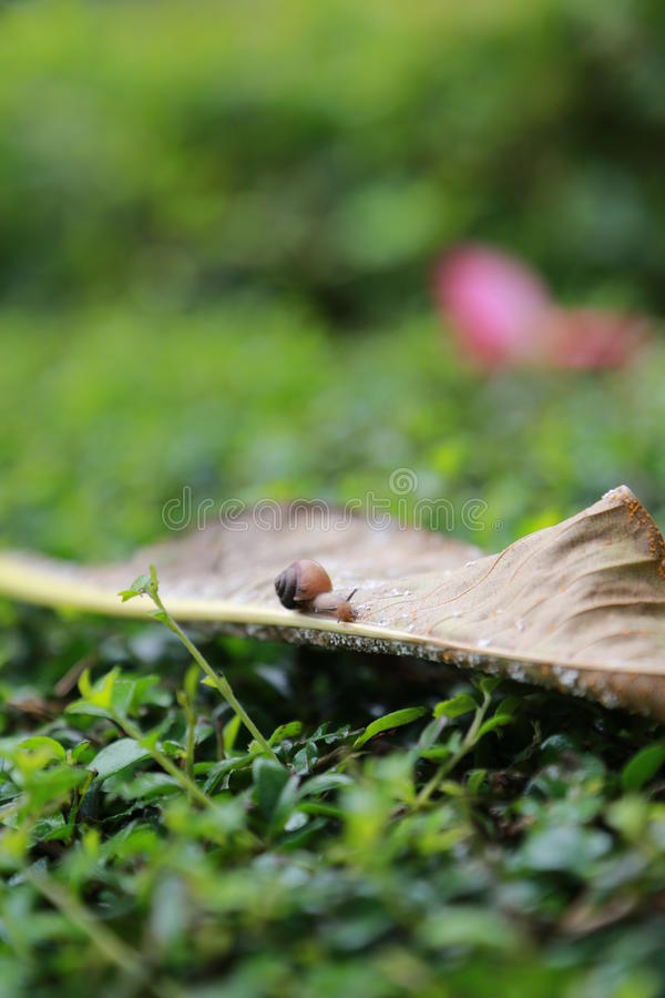 The snail. Green plants on a piece of falling leaves, fallen leaves have a crawling in the snail, look forward to feeling royalty free stock photos
