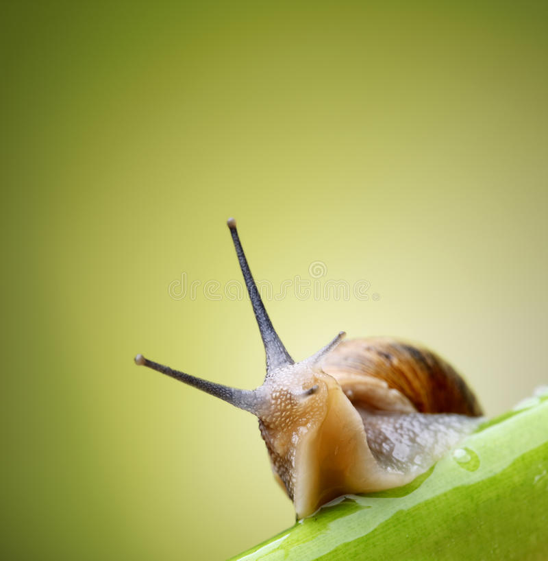 Download Snail on green stem stock image. Image of close, plant - 24767609