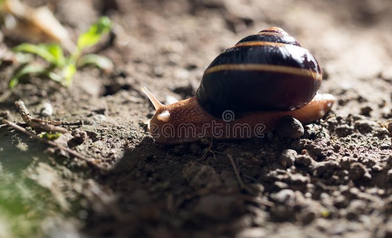 Snail on the ground in nature stock photography