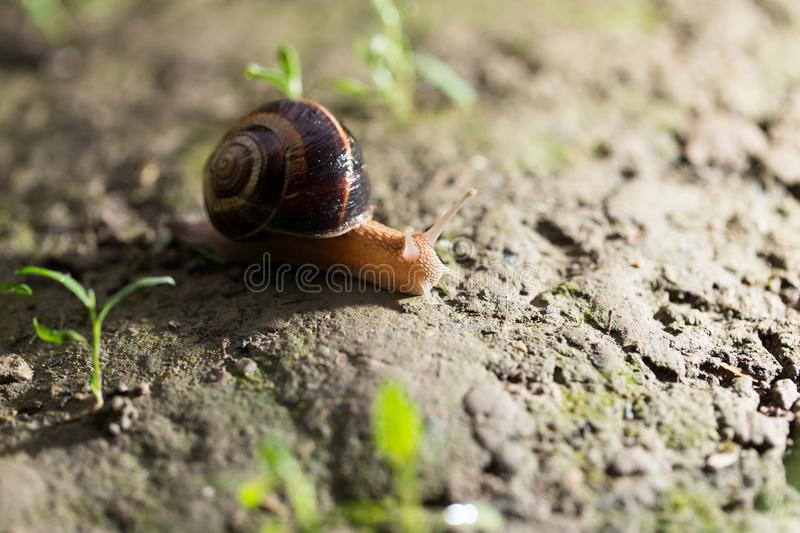 Snail on the ground in nature stock photos