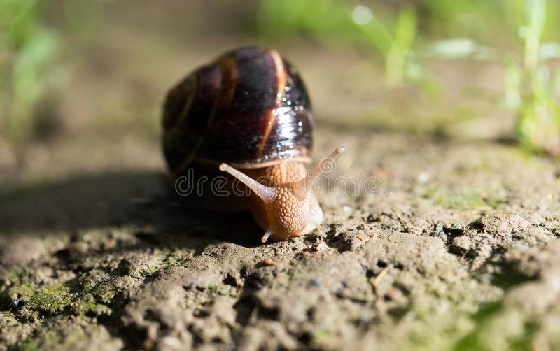 Snail on the ground in nature royalty free stock photos