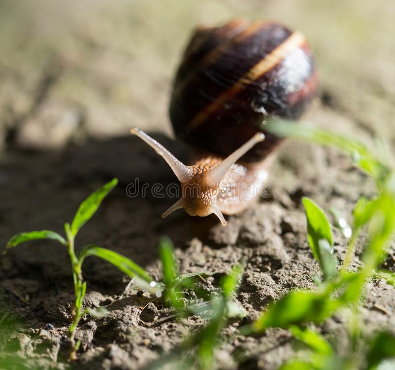 Snail on the ground in nature stock image