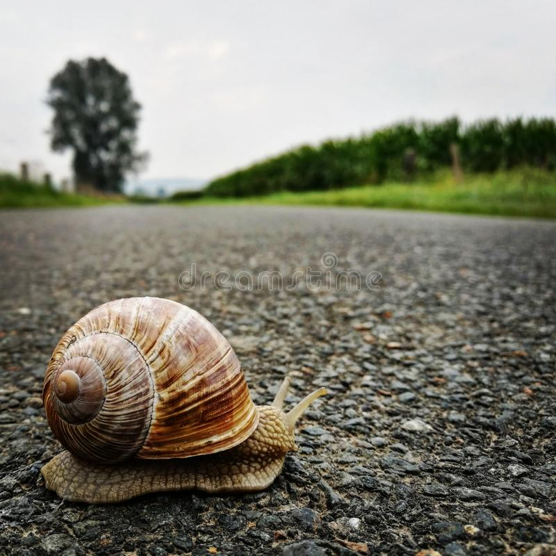 Snail on the ground stock image