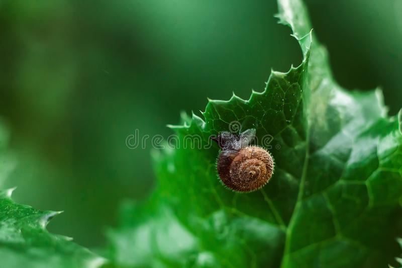 The snail hid behind a sheet. The snail hid behind a green sheet on blur background royalty free stock images