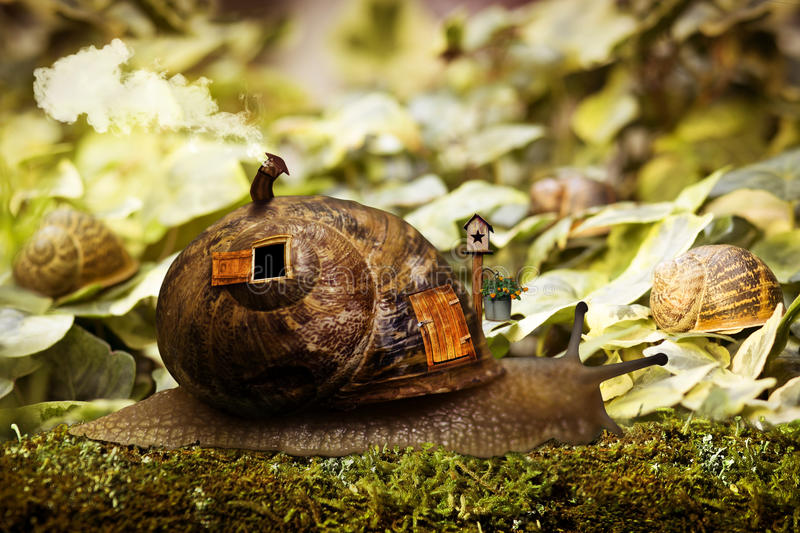 Snail house royalty free illustration