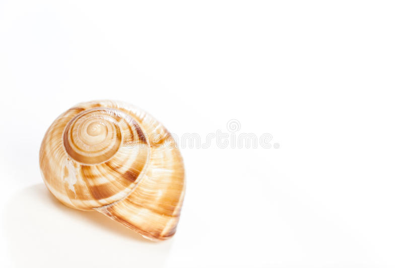 Snail house on white. Macro Photo of a snail house on white background royalty free stock photography