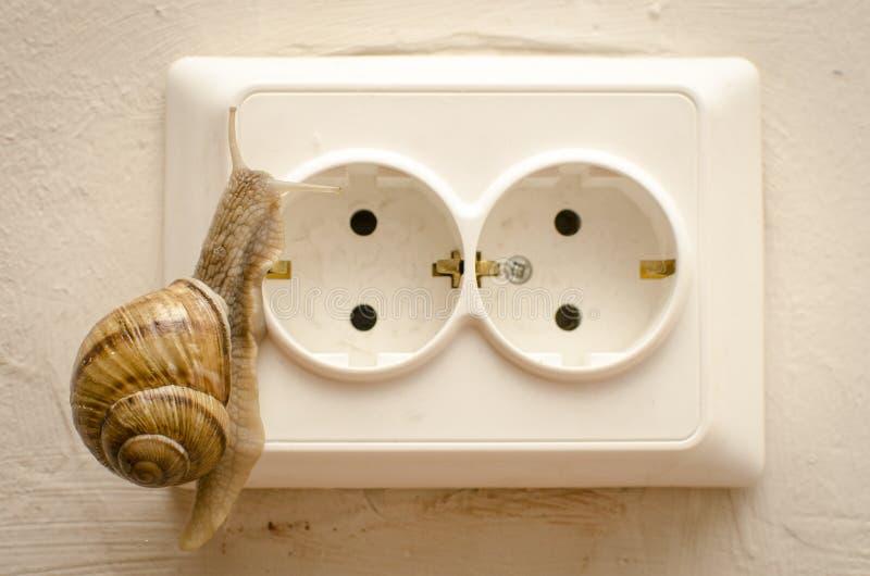 Download Snail joke stock photo. Image of priza, snail, helix - 25488578