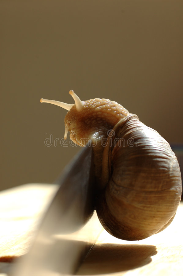 Download Snail on knife stock photo. Image of knife, food, kitchen - 10008