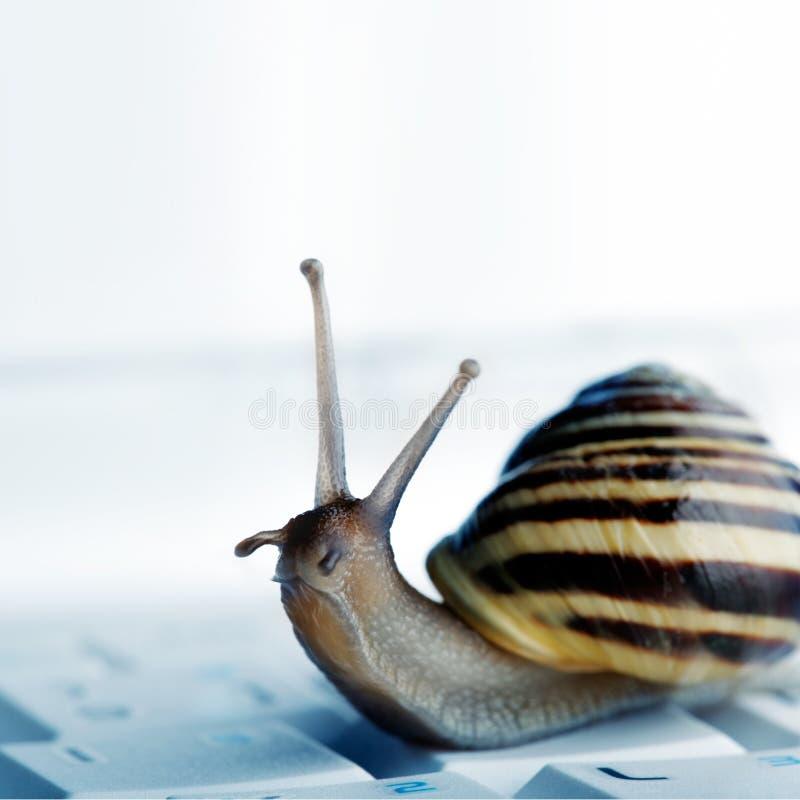 Snail on a laptop stock image