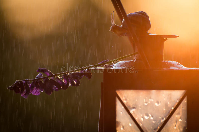 Snail and lavender flowers on a lantern in sunset. Concept: Calming, Relaxing, Therapy, SPA background stock photos