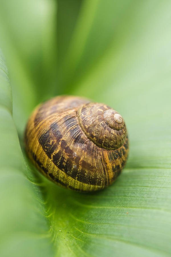THE SNAIL IN THE LEAF royalty free stock image