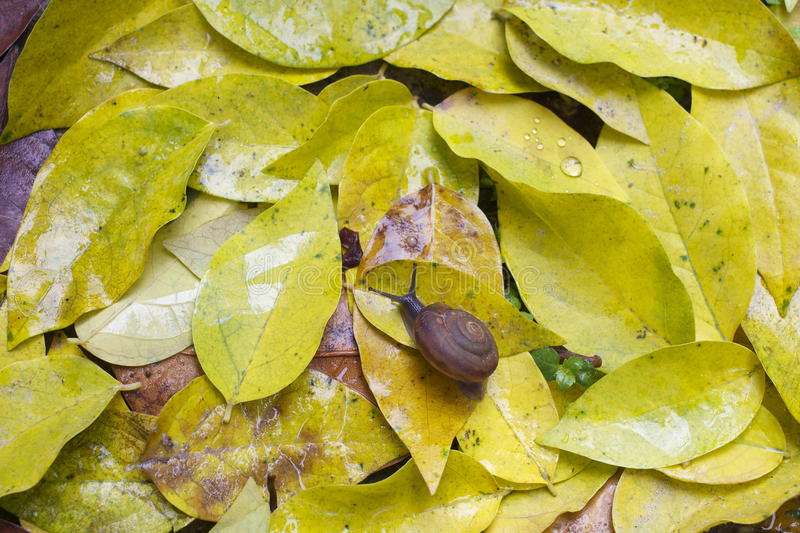 Download Snail on leaves stock photo. Image of life, creep, humid - 32929198