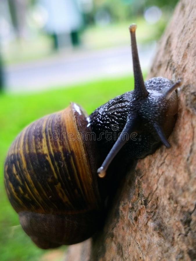 A snail in a wood royalty free stock images