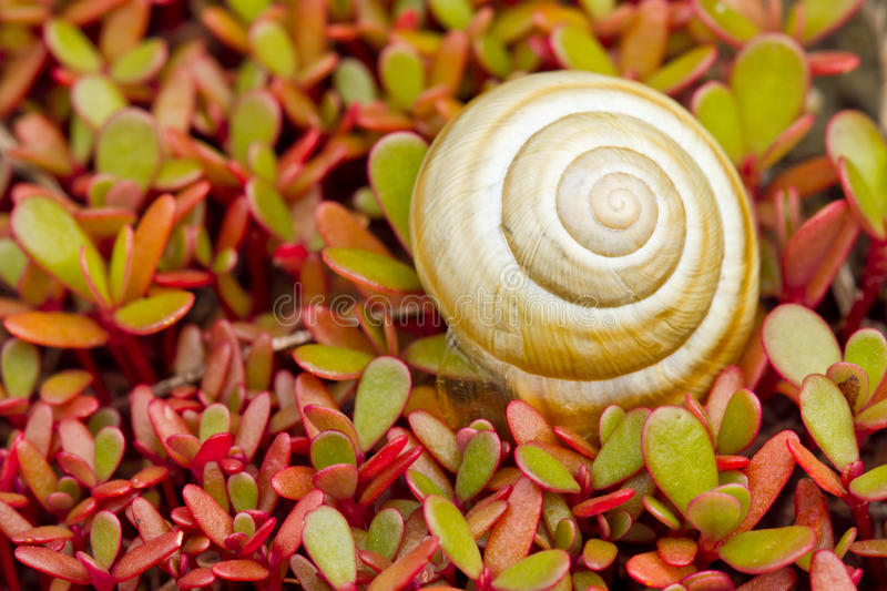 Download Snail stock photo. Image of leaves, brown, slimy, moving - 31954930