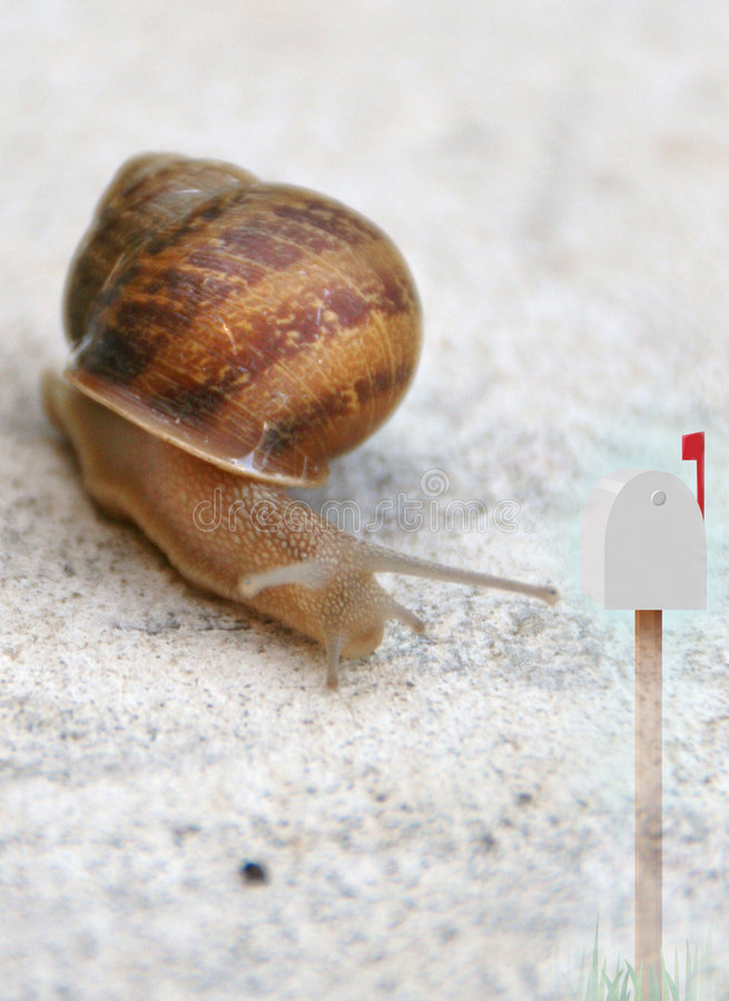 Snail and mail or post box. Conceptual view of snail and mail or post box royalty free stock photo