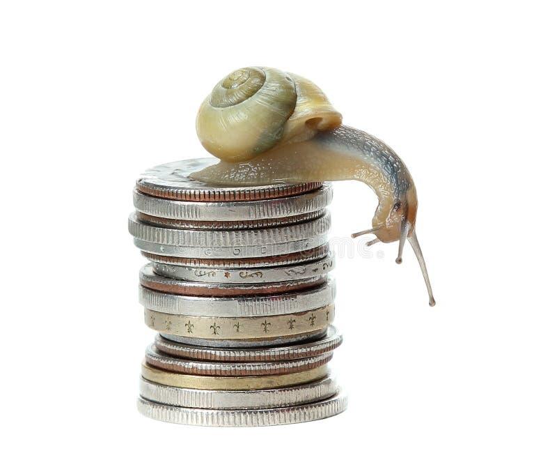 Snail on money stock photo