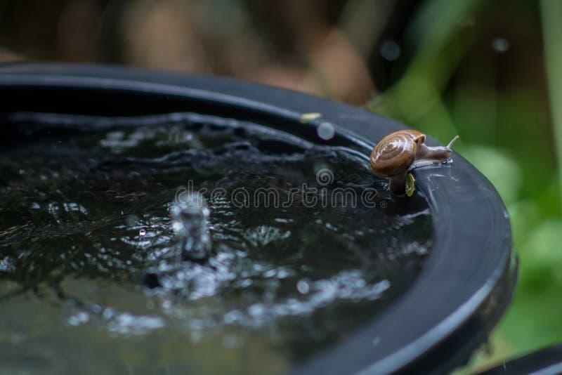 Snail movement stock photos