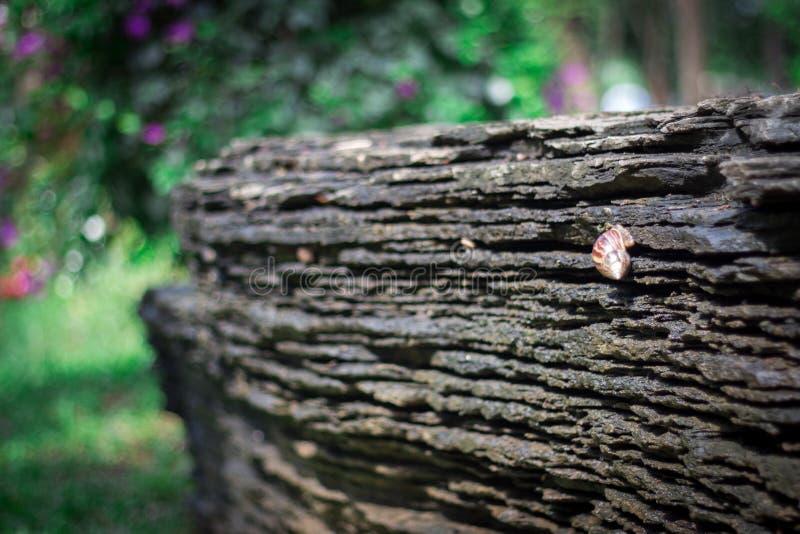 snail moving on a rock. stock photo