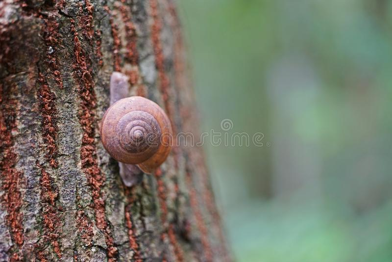 Snail in natural forest. Rainforest Thailand stock images