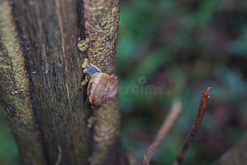 Snail in natural forest. Rainforest Thailand royalty free stock photos