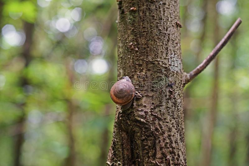 Snail in natural forest. Rainforest Thailand stock photos