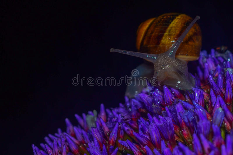 Snail in the night stock photo