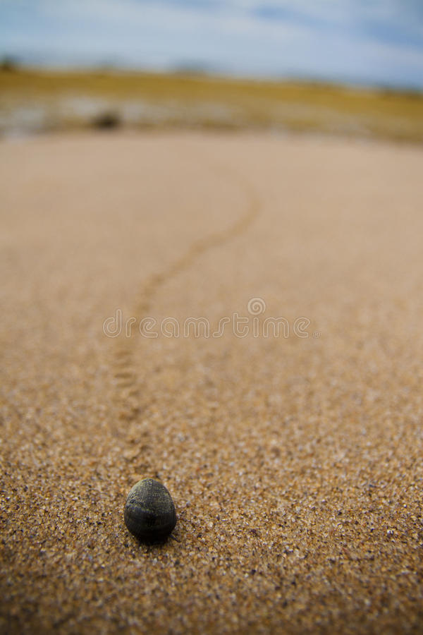 Free Snail On A Beach Royalty Free Stock Photography - 27666957