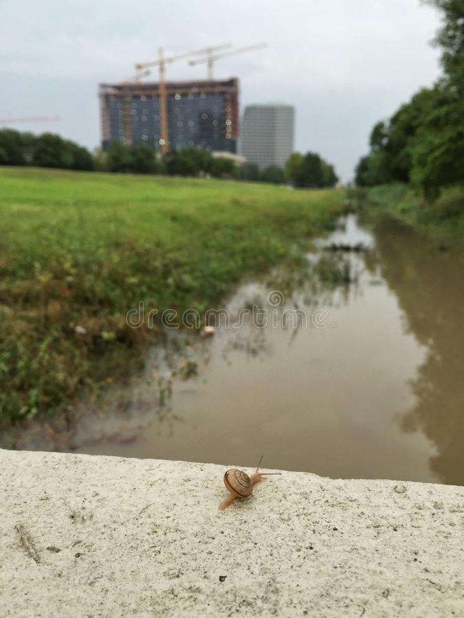 Free Snail On The Wall Over Flooded Bayou Stock Photos - 54700053