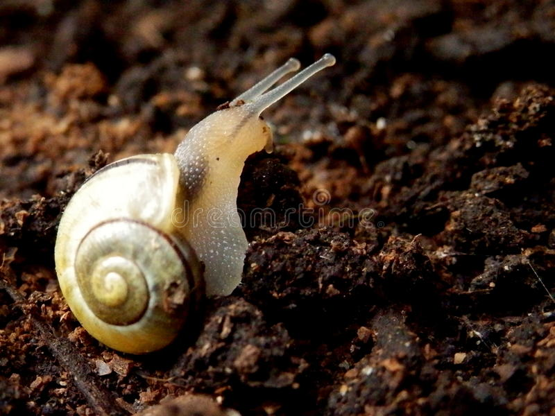Close-up Snail on organic soil nature background royalty free stock photography