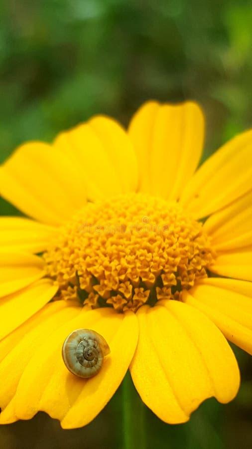 Snail på en blomma arkivbild