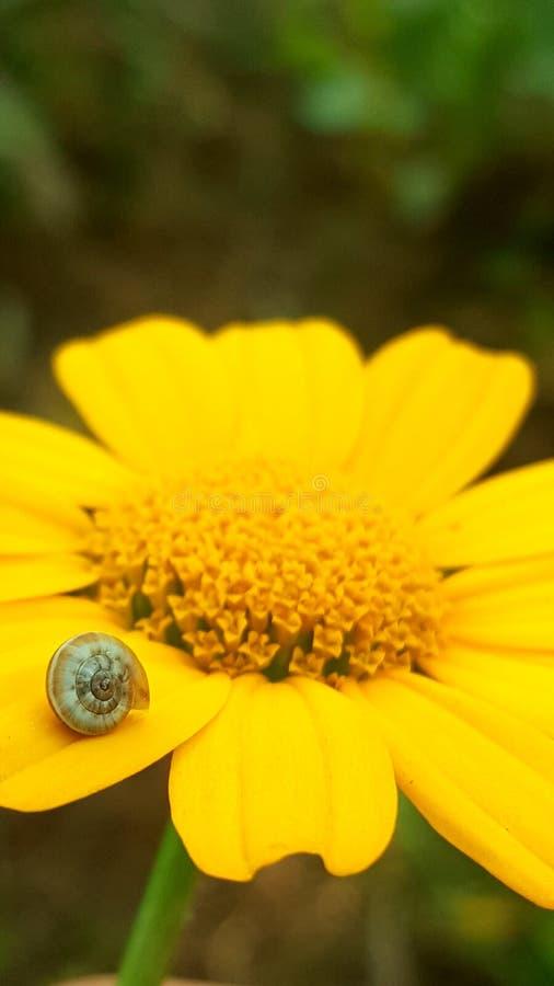 Snail på en blomma arkivbilder