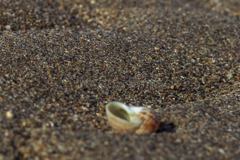 Snail på sjösand royaltyfri bild