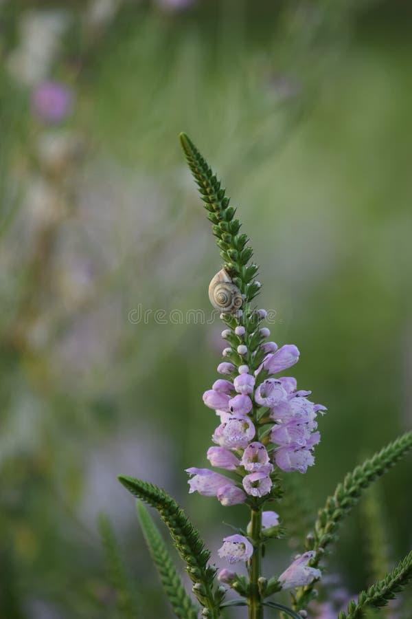 Snail p? en blomma royaltyfri bild
