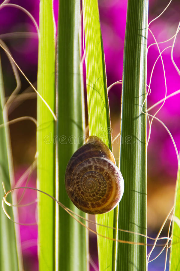 Snail On A Palm Leaf Stock Images