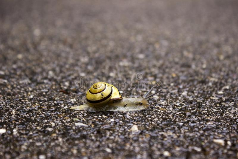 A snail with a pancake crawls along the way. Concept - achievement of the goal stock image