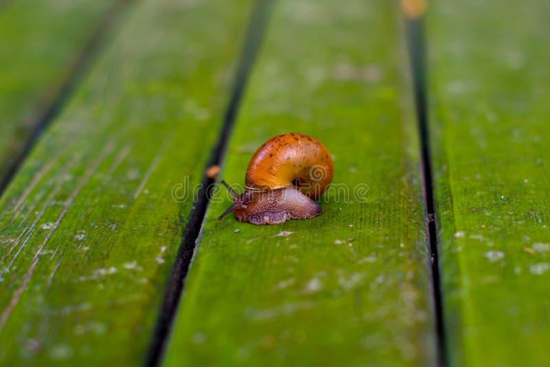 The snail stock photo