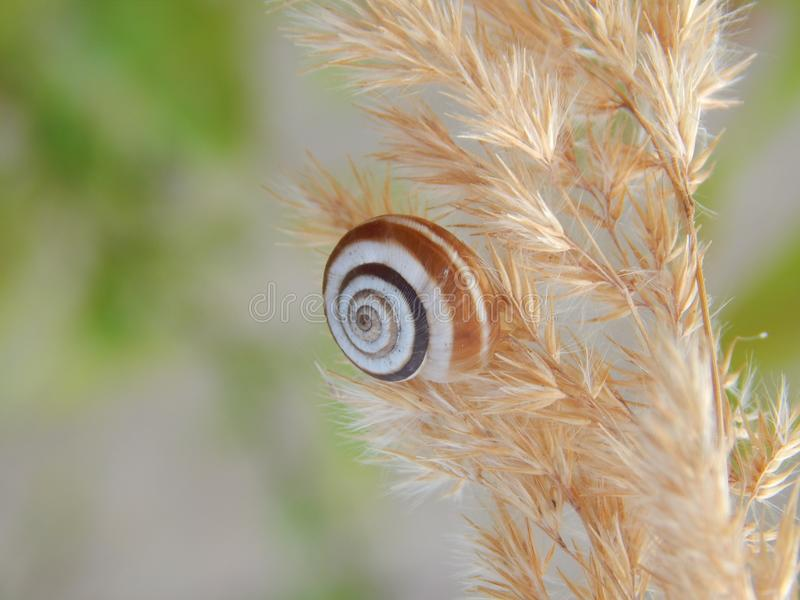 Snail on a plant 2. I took this photograph of a living snail that climbed up a plant on a sunny day in Leipzig/Germany stock image