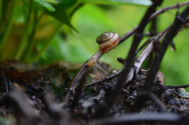 The snail stock photos