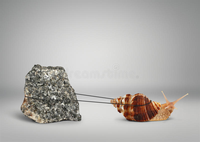 Snail pulling big stone, slowly persistence concept royalty free stock photo