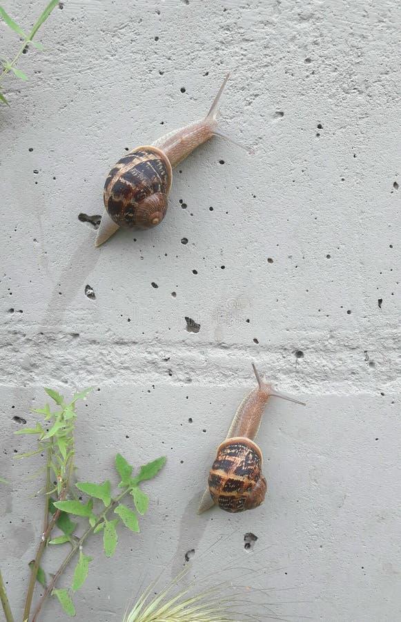 Snail race stock image