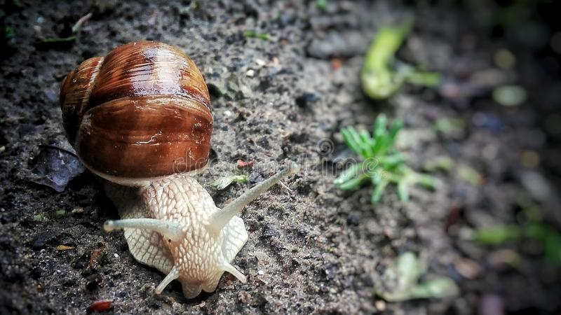 Snail after rain stock photo