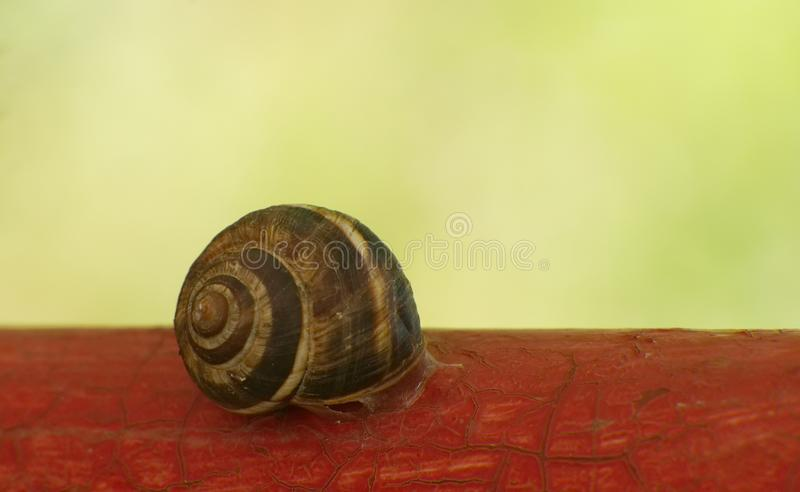 Snail on red. Snail or red pattern with green blurred background stock image