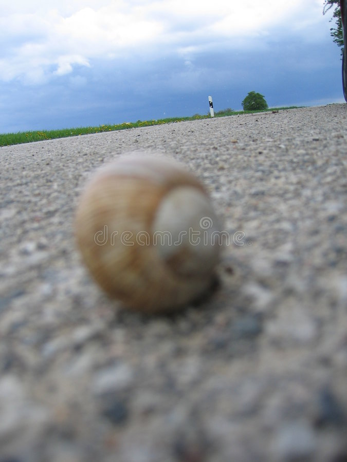 Download Snail On The Road Royalty Free Stock Photos - Image: 2908