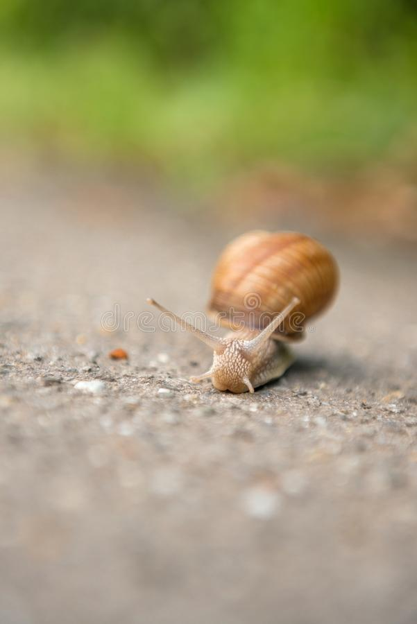 Snail on the road stock images