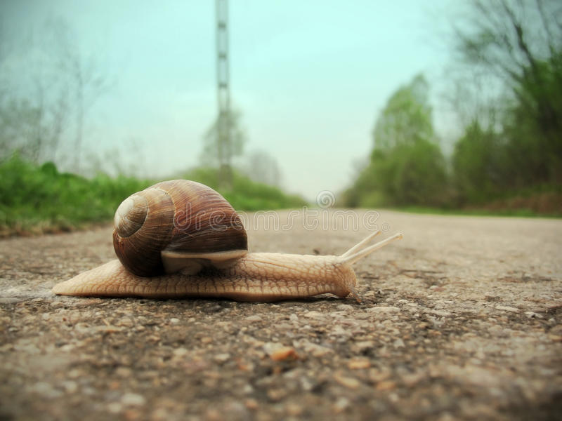 Snail on the road. Snail on the dirt-track in macro close-up blurred background stock photo