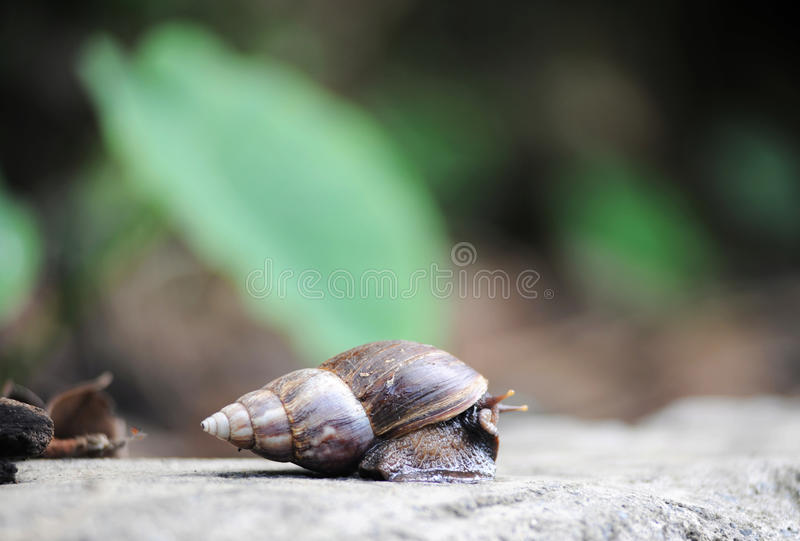 Snail on Rock stock images