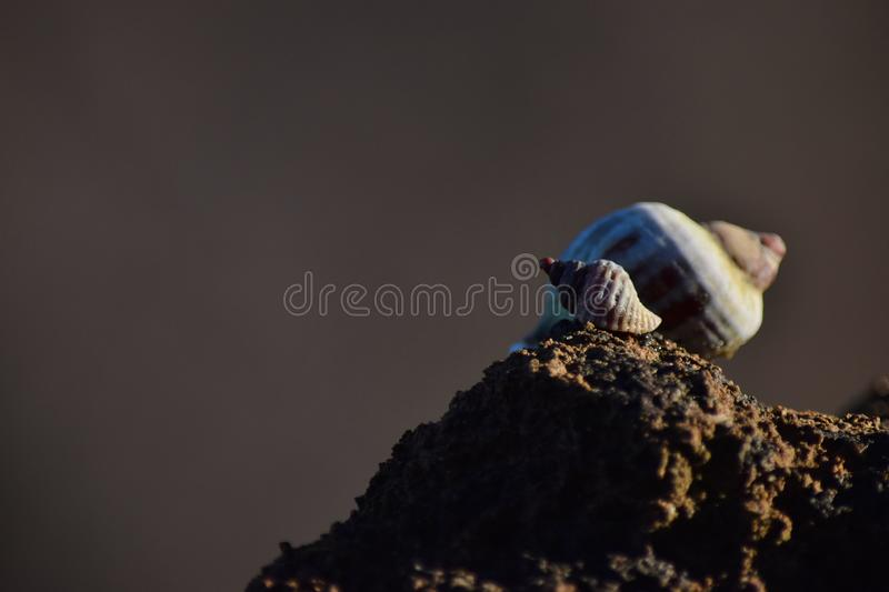 Snail on a rock on the coast royalty free stock images