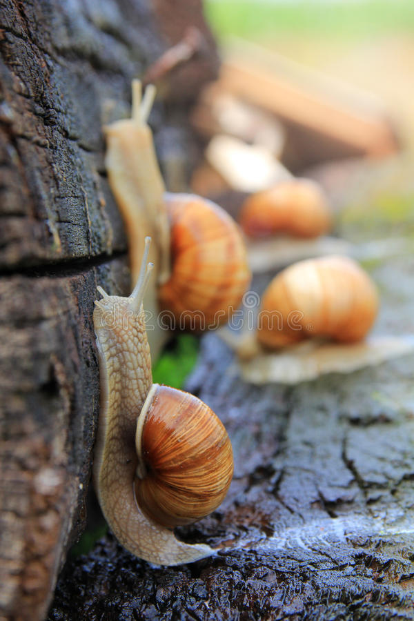 Download Snail Run Stock Photos - Image: 26447893